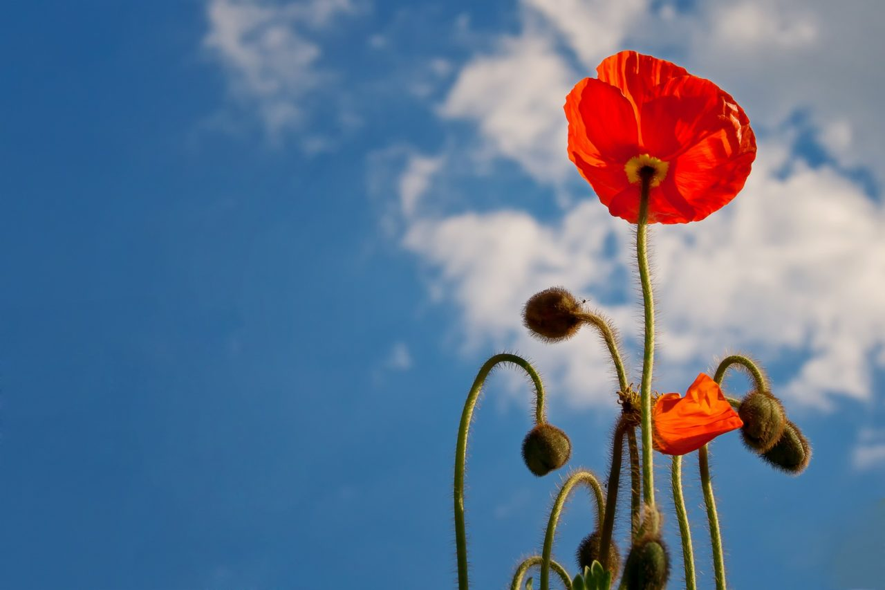 Remembrance Day – 100 Years Later
